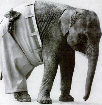 شلوار فیل